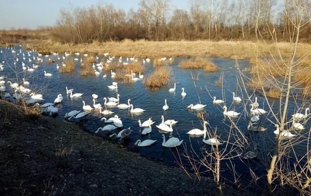На території Латвії вперше виявили пташиний грип